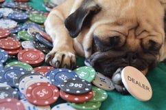 Το πρόσωπο του πόκερ στοκ φωτογραφίες