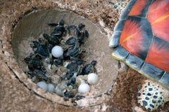 Το πρότυπο έκανε της ρητίνης μια χελώνα και αυγά πράσινης θάλασσας μωρών στην εκκόλαψη Στοκ φωτογραφία με δικαίωμα ελεύθερης χρήσης