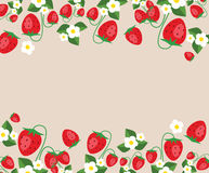 Το πρότυπο πλαισίων με τις φράουλες, βγάζει φύλλα και ανθίζει Διανυσματική ανασκόπηση Στοκ Φωτογραφία