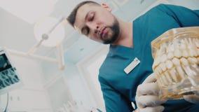 Το πρότυπο του σαγονιού με έναν οδοντίατρο τα κόκκαλα σαγονιών απόθεμα βίντεο