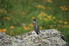 Το πρόωρο πουλί παίρνει το σκουλήκι Στοκ εικόνα με δικαίωμα ελεύθερης χρήσης