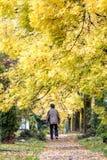 το πρώιμο φθινόπωρο Στοκ Εικόνες