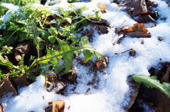 Το πρώτο κρύο χιόνι στοκ εικόνες