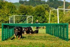 Το πρώτο πρωτάθλημα της εθνικής αστυνομίας της Ουκρανίας με τους ολόγυρους χειριστές σκυλιών Στοκ εικόνα με δικαίωμα ελεύθερης χρήσης