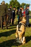 Το πρώτο πρωτάθλημα της εθνικής αστυνομίας της Ουκρανίας με τους ολόγυρους χειριστές σκυλιών Στοκ φωτογραφία με δικαίωμα ελεύθερης χρήσης