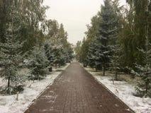 Το πρώτο χιόνι ενέπεσε στο πάρκο Στοκ φωτογραφίες με δικαίωμα ελεύθερης χρήσης