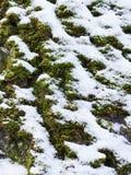 Το πρώτο χιόνι στην πράσινη χλόη, φθινόπωρο, χειμώνας, άνοιξη Στοκ εικόνες με δικαίωμα ελεύθερης χρήσης