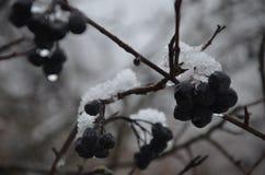 Το πρώτο χιόνι Στοκ φωτογραφίες με δικαίωμα ελεύθερης χρήσης