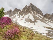 Το πρώτο όμορφο άνθισμα Sextener Dolomiten άνοιξη στοκ εικόνες με δικαίωμα ελεύθερης χρήσης