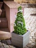 Το πυξάρι μπροστά από την πόρτα Στοκ εικόνα με δικαίωμα ελεύθερης χρήσης