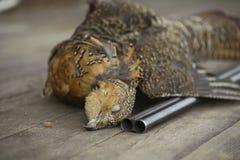 Το πυροβόλο όπλο σκότωσε τους κυνηγούς πουλιών, θήραμα, αγριόκουρκος Στοκ φωτογραφία με δικαίωμα ελεύθερης χρήσης