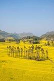 Το πόδι στρατόπεδων δήμων Niujie κομητειών Luoping Yunnan βιδώνει το terraced λουλούδι canola Στοκ φωτογραφία με δικαίωμα ελεύθερης χρήσης