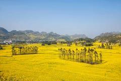 Το πόδι στρατόπεδων δήμων Niujie κομητειών Luoping Yunnan βιδώνει το terraced λουλούδι canola Στοκ Φωτογραφία