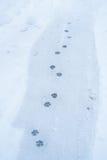 το πόδι τυπώνει το χιόνι Στοκ Φωτογραφίες