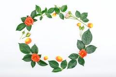 Το πλαίσιο στεφανιών με τα τριαντάφυλλα και αυξήθηκε πέταλα Στοκ εικόνα με δικαίωμα ελεύθερης χρήσης