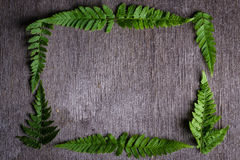 Το πλαίσιο της φτέρης πράσινο βγάζει φύλλα Στοκ Εικόνες