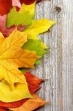 Το πλαίσιο του φθινοπώρου βγάζει φύλλα Στοκ Εικόνες