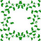 Το πλαίσιο των πράσινων κλάδων με τα φύλλα Κατάλληλος για το κλωστοϋφαντουργικό προϊόν, το ύφασμα και τη συσκευασία Στοκ Εικόνα