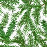 Το ρεαλιστικό πράσινο δέντρο έλατου διακλαδίζεται άνευ ραφής σχέδιο στο άσπρο υπόβαθρο Χριστούγεννα, νέο σύμβολο έτους Στοκ Φωτογραφία