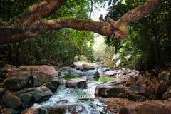 Το ρεύμα βουνών διατρέχει των πετρών στη ζούγκλα κάτω από ένα μεγάλο δέντρο Στοκ φωτογραφίες με δικαίωμα ελεύθερης χρήσης