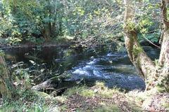 Το ρεύμα ποταμών μέσω του δάσους Στοκ φωτογραφία με δικαίωμα ελεύθερης χρήσης