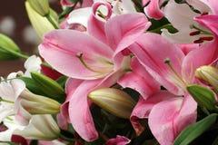 Το ροζ ανθίζει lilly Στοκ εικόνα με δικαίωμα ελεύθερης χρήσης
