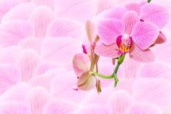 Το ροζ επισήμανε τα εξωτικά λουλούδια στις θολωμένες ορχιδέες στοκ εικόνες με δικαίωμα ελεύθερης χρήσης