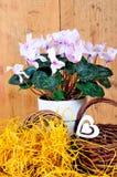 το ροζ καρδιών λουλου&del Στοκ εικόνες με δικαίωμα ελεύθερης χρήσης