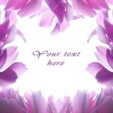το ροζ λουλουδιών Στοκ φωτογραφίες με δικαίωμα ελεύθερης χρήσης