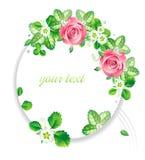 το ροζ πλαισίων λουλο&upsil Στοκ Εικόνα