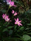 Το ροζ δροσίζει Στοκ φωτογραφία με δικαίωμα ελεύθερης χρήσης