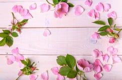 Το ρομαντικό σχέδιο, οδοντώνει άγριο αυξήθηκε Στοκ εικόνες με δικαίωμα ελεύθερης χρήσης