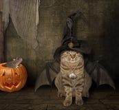 Το ρόπαλο - γάτα σε ένα καπέλο Στοκ φωτογραφίες με δικαίωμα ελεύθερης χρήσης