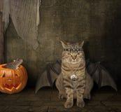 Το ρόπαλο - γάτα Στοκ εικόνες με δικαίωμα ελεύθερης χρήσης