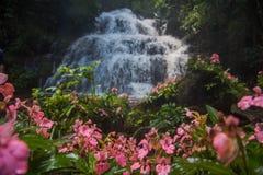 Το ρόδινος-χειλικό Habenaria (ρόδινο αιφνιδιαστικό λουλούδι δράκων) μπροστά από Στοκ Εικόνα