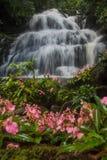 Το ρόδινος-χειλικό Habenaria (ρόδινο αιφνιδιαστικό λουλούδι δράκων) μπροστά από Στοκ εικόνες με δικαίωμα ελεύθερης χρήσης