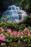 Το ρόδινος-χειλικό Habenaria (ρόδινο αιφνιδιαστικό λουλούδι δράκων) μπροστά από Στοκ Εικόνες
