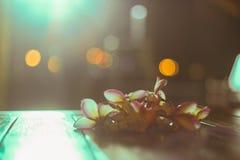 Το ρόδινο λουλούδι plumeria franjipani έβαλε σε έναν ξύλινο πίνακα με το φωτισμό από την πλάτη και θόλωσε το υπόβαθρο, εκλεκτική  Στοκ Εικόνες