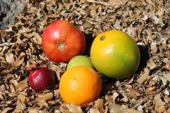 Το ρόδι και τα πορτοκαλιά φρούτα στο φθινόπωρο ξεραίνουν τα φύλλα Στοκ εικόνες με δικαίωμα ελεύθερης χρήσης