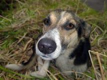 Το ρύγχος ενός περιπλανώμενου σκυλιού Στοκ εικόνα με δικαίωμα ελεύθερης χρήσης