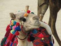 Το ρύγχος της καμήλας είναι διακοσμημένο με τους ζωηρόχρωμους θυσάνους και την αιγυπτιακή εθνική διακόσμηση στοκ φωτογραφίες