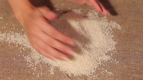 Το ρύζι μεταθέτει burlap συγκομιδή αφαιρεί τα χέρια απόθεμα βίντεο