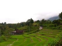 Το ρύζι στο βουνό στοκ εικόνες