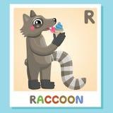 Το Ρ είναι για το ρακούν γράμμα ρ ρακούν , χαριτωμένη απεικόνιση διανυσματικό λευκό εικόνων ανασκόπησης αλφάβητου ζωικό Στοκ Εικόνες