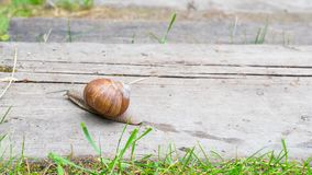 Το σαλιγκάρι σέρνεται κατά μήκος του ξύλινου βήματος, χρόνος-σφάλμα απόθεμα βίντεο