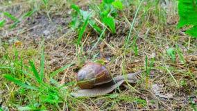 Το σαλιγκάρι σέρνεται στο έδαφος, χρόνος-σφάλμα φιλμ μικρού μήκους