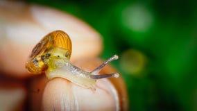 Το σαλιγκάρι χτυπά στοκ εικόνες με δικαίωμα ελεύθερης χρήσης