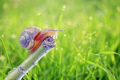 Το σαλιγκάρι στοκ φωτογραφίες