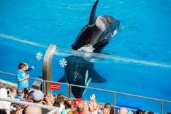 Το ΣΑΝ ΝΤΙΈΓΚΟ, ΗΠΑ - 15 ΝΟΕΜΒΡΊΟΥ, 2015 - η φάλαινα δολοφόνων παρουσιάζει εν πλω κόσμο Στοκ Φωτογραφία