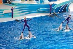 Το ΣΑΝ ΝΤΙΈΓΚΟ, ΗΠΑ - 15 ΝΟΕΜΒΡΊΟΥ, 2015 - το δελφίνι παρουσιάζει εν πλω κόσμο Στοκ Φωτογραφίες